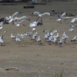Ferns and gulls